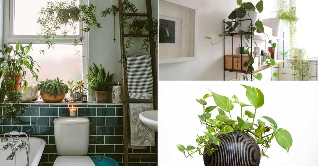พื้นที่เล็ก ๆ ในห้องน้ำของคุณก็สามารถตกแต่ง ปลูกต้นไม้เพื่อให้ห้องน้ำของคุณเป็นสีเขียวได้สบาย ๆ
