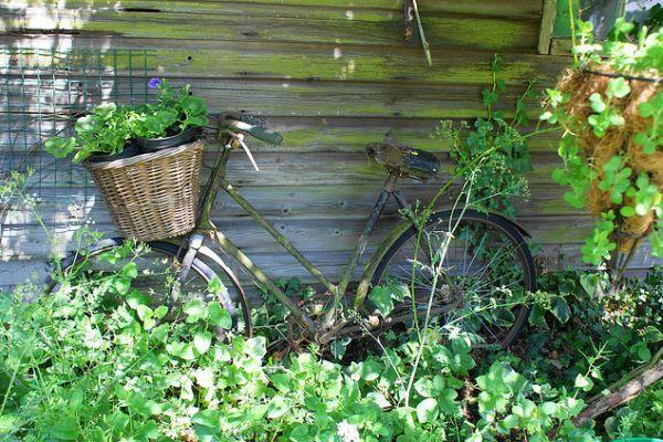 แปลงร่างจักรยานเก่าให้เป็นที่ปลูกดอกไม้สุดชิค รูปที่ 16