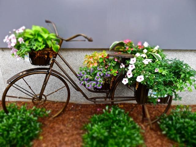 แปลงร่างจักรยานเก่าให้เป็นที่ปลูกดอกไม้สุดชิค รูปที่ 18