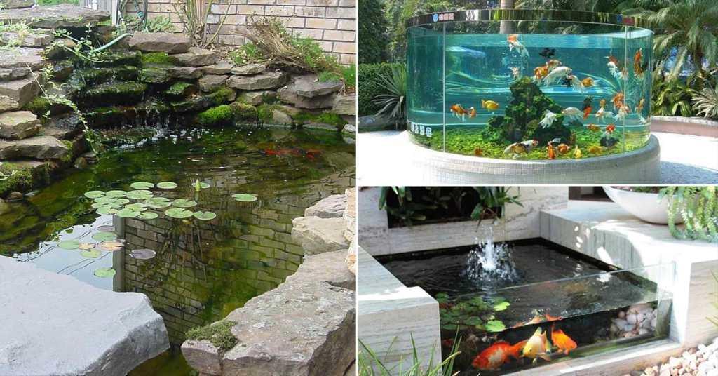 การตกแต่งสวนหลังบ้านด้วยบ่อเลี้ยงปลา