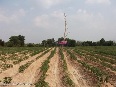 ขายที่ดิน พนมสารคาม ฉะเชิงเทรา ถนน 304  เหมาะทำเกษตรพอเพียง ใกล้กรุงเทพฯ แค่ชัวโมงกว่า ๆเท่านั้นไร่ละ 350,000