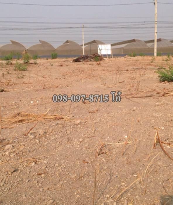 ขายที่ดิน 4 ไร่ ปากช่อง-เขาใหญ่ หนองสาหร่าย ทำเลดี ติดถนน 098-097-8715 โอ๋