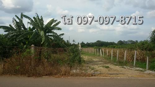 ขายที่ดิน 8 ไร่ 350 ตรว. พร้อมสวนผลไม้ ปากช่อง ใกล้ตลาดน้ำกลางดง 098-097-8715 โอ๋