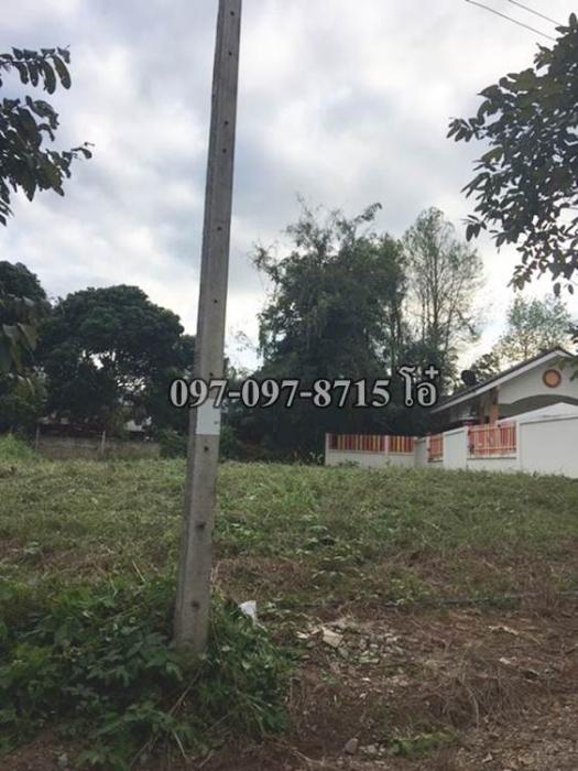 ขายที่ดิน 256 ตรว. พร้อมบ้านเช่า 5 หลัง อำเภอปากช่อง สนใจติดต่อคุณโอ๋ 098-097- 8715