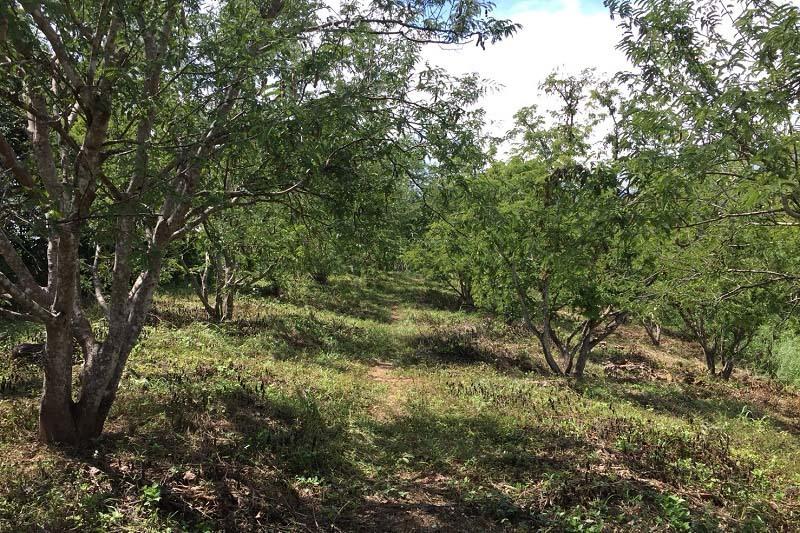 ++ ขายถูก ++ ที่ดิน อ.หล่มเก่า เพชรบูรณ์ 27 ไร่ 1 งาน 18 ตารางวา พร้อมสวนต้นสัก และสวนมะขามหวาน มีถนนเข้าถึงสะดวก