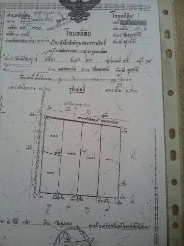ขายที่ดิน ใจกลางเมืองอุดร 1ไร่11 ตรวอ.เมือง จ.อุดรธานี