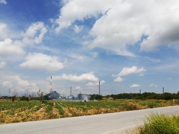 ที่ดิน สีม่วง ใกล้นิคมRIL มาบตาพุด 10ไร่ ซอยหนองหว้า-ห้วยโป่ง ห่างถนนใหญ่เพียง 320เมตร