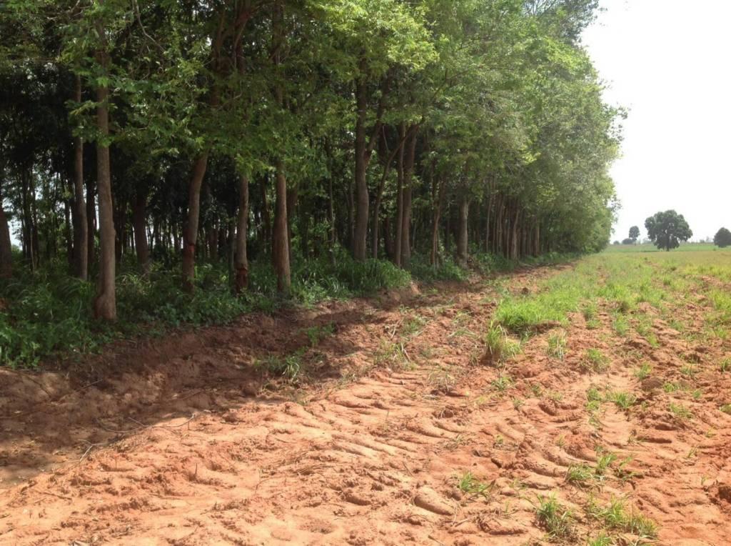 ขายไม้ใหญ่ ยกสวน 1200 ต้น ราคาพิเศษมาก จดทะเบียนต้นไม้ถูกต้อง