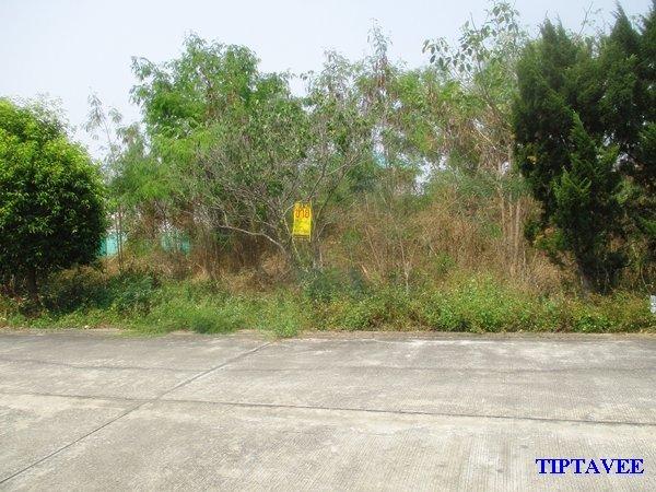 22352 ขายที่ดินเชียงใหม่ ที่ดินใกล้แยกสารภี ต.ชมภู อ.สารภี เชียงใหม่ Sale Land, Chomphu Saraphi Chiangmai THAILAND