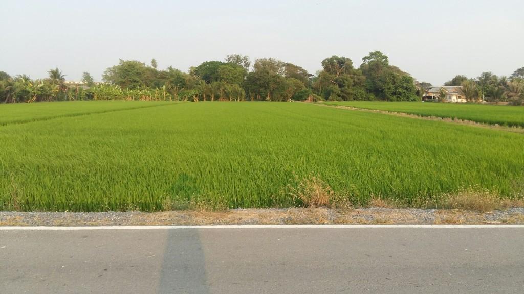 ขาย ที่ดิน คลอง 12 ลำลูกกา จ.ปทุมธานี ติดถนน เนื้อที่ 61 ไร่ 2 งาน 21 ตรว.